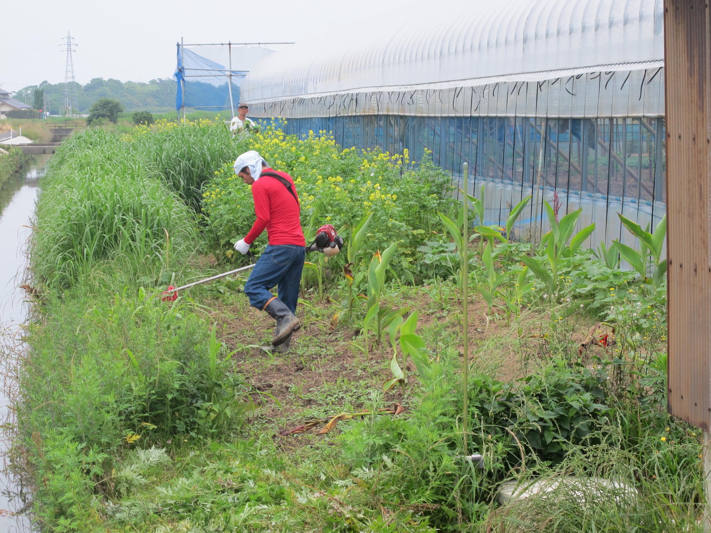 大社ファームの草刈